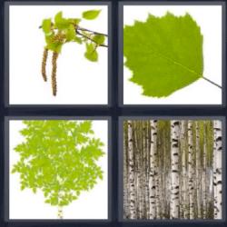 4 fotos 1 palabra rama hojas troncos