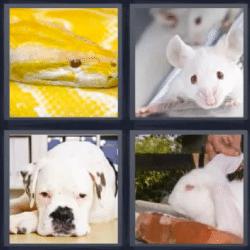 4 fotos 1 palabra serpiente amarilla