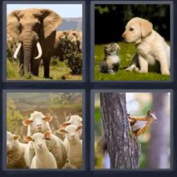 4 fotos 1 palabra elefante perro y gato