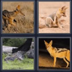 4 fotos 1 palabra zorro