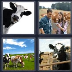 4 fotos 1 palabra vacas