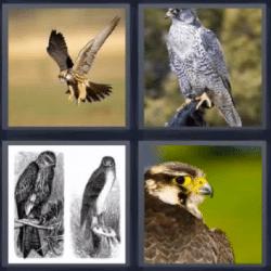 4 fotos 1 palabra águilas