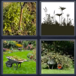 4 Fotos 1 Palabra Vegetacion 4fotos 1palabra Com