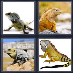 4 fotos 1 palabra lagarto