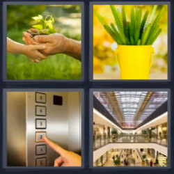 4 fotos 1 palabra maceta amarilla
