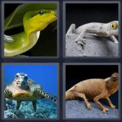 4 fotos 1 palabra serpiente tortuga