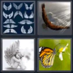 4 fotos 1 palabra mariposa