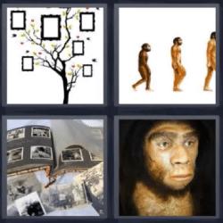4 fotos 1 palabra evolución