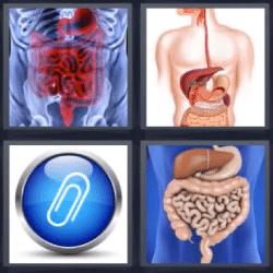 4 fotos 1 palabra órganos