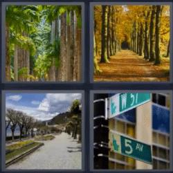 Soluciones-4-Fotos-1-palabra-avenida