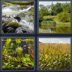 4 fotos 1 palabra rio plantas