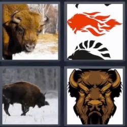 4 fotos 1 palabra bufalo