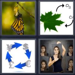4 fotos 1 palabra mariposa hoja