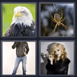 4 fotos 1 palabra águila araña