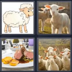 4 fotos 1 palabra ovejas carne