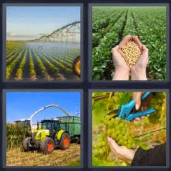 4 fotos 1 palabra tractor uvas