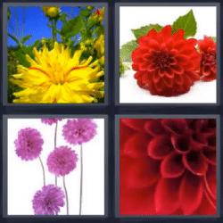 4 fotos 1 palabra flores
