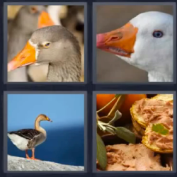 4 fotos 1 palabra aves