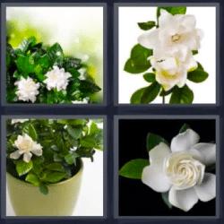 4 fotos 1 palabra flores blancas