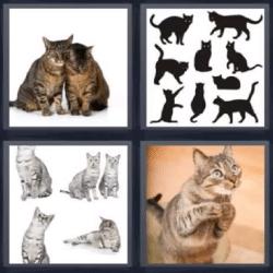 4 fotos 1 palabra muchos gatos