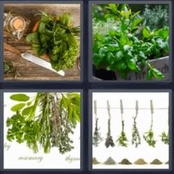 4 Fotos 1 Palabra Plantas Colgadas En Una Cuerda Con Pinzas Solución