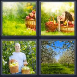 4 fotos 1 palabra manzanas