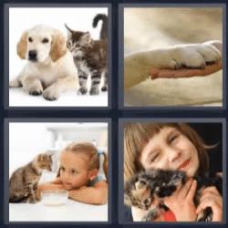 4 fotos 1 palabra perro y gato