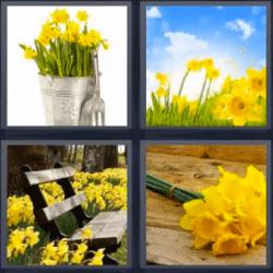 4 fotos 1 palabra flores amarillas
