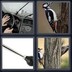 4 fotos 1 palabra volante pajaro