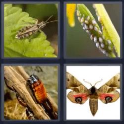 4 fotos 1 palabra insectos