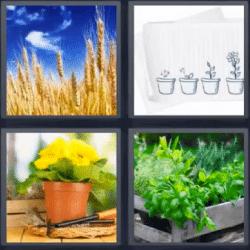 4 fotos 1 palabra maceta trigo