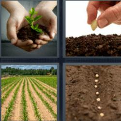 4 fotos 1 palabra plantita