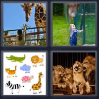 4 fotos 1 palabra jirafa leones