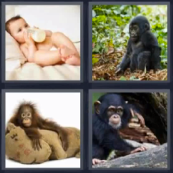 4 fotos 1 palabra bebé con mamila, changos, monos, bebe con biberón
