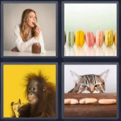 4 fotos 1 palabra gato galletas