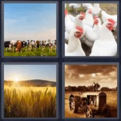 4 fotos 1 palabra vacas gallinas