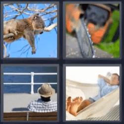 4 fotos 1 palabra koala, sierra, hombre durmiendo