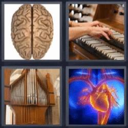 4 fotos 1 palabra cerebro, corazón