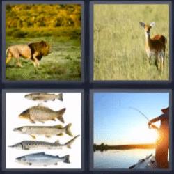 4 fotos 1 palabra leon, peces, pescador, gacela