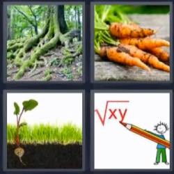 4 fotos 1 palabra bosque, zanahorias, plantas, operación