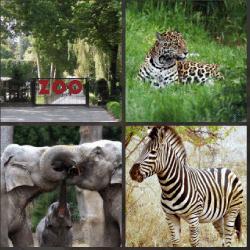 1-Palabra-4-Fotos-nivel-1.25-Animal