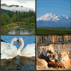 1 palabra 4 fotos cisnes tigres