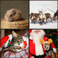 1-Palabra-4-Fotos-nivel-13.48-Animal