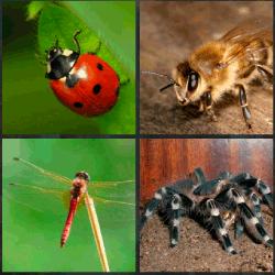 1 palabra 4 fotos araña