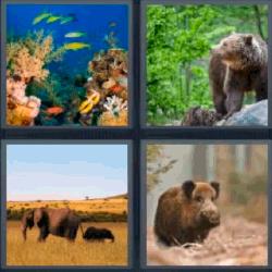 4 fotos 1 palabra acuario
