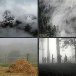 1 palabra 4 fotos bosque con niebla