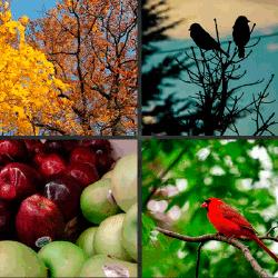 1 palabra 4 fotos manzanas pajaro rojo