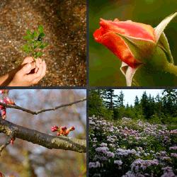 1 palabra 4 fotos rosa flores
