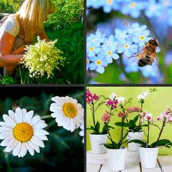 1 palabra 4 fotos macetas abeja