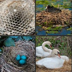 1 palabra 4 fotos huevos azules